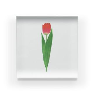 🌷tulip🌷 Acrylic Block