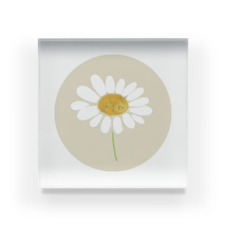 LePuyの🌼chamomile🌼 Acrylic Block