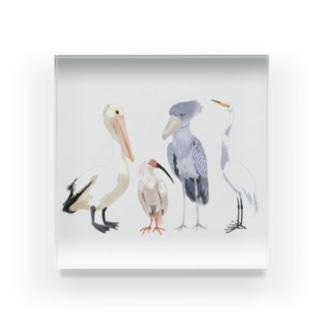 ペリカン目の鳥たち Acrylic Block