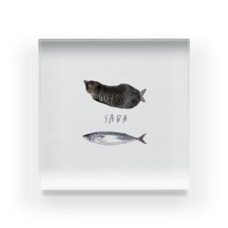 fish cat cat Acrylic Block