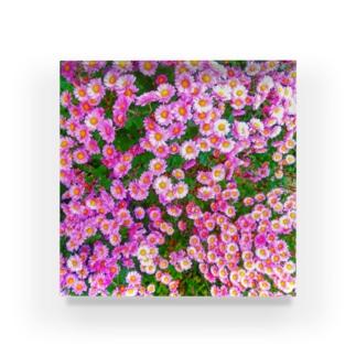 小菊 Acrylic Block