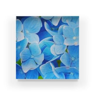 紫陽花 Acrylic Block
