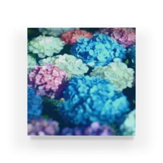 水と紫陽花 Acrylic Block
