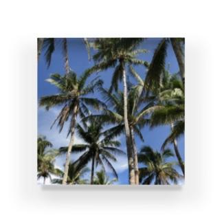 Palm tree Acrylic Block
