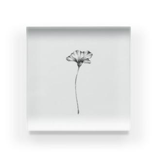 はるのおさんぽの【 ドシンプルな一輪のヒナゲシ 】 Acrylic Block