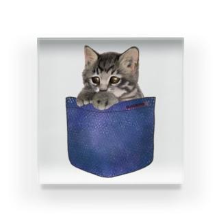 デニムポケットからひょっこり子猫ちゃん Acrylic Block