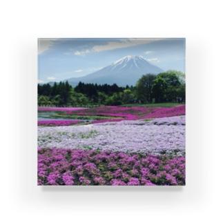 シバザクラ(芝桜) Acrylic Block