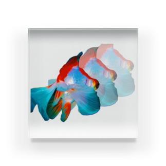 夏の金魚 Acrylic Block