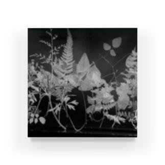植物学 Acrylic Block