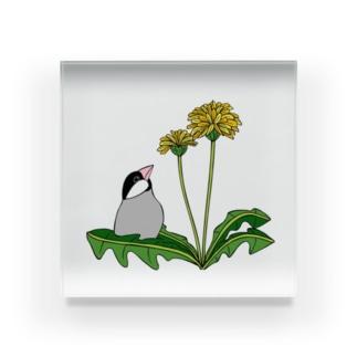 文鳥とタンポポ Acrylic Block