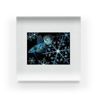 スマラグティナ アイスクリスタルカラー Acrylic Block