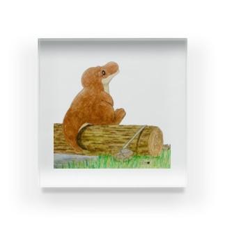 ティラノサウルスのレックス Acrylic Block