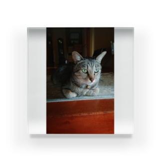 キジトラ猫ミミさん Acrylic Block
