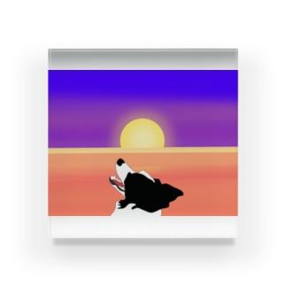 夕日をバックにあらぶるどんちゃん Acrylic Block