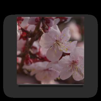 hiroki-naraの梅 ウメ Japanese apricot DATA_P_155 春 spring Acrylic Block