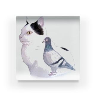 猫とハト Acrylic Block