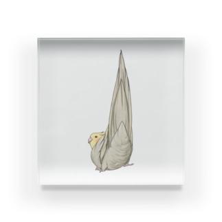 尾羽がピン 可愛いオカメインコちゃん【まめるりはことり】 Acrylic Block