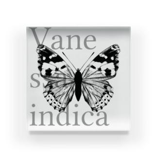 Vanessa indica Acrylic Block