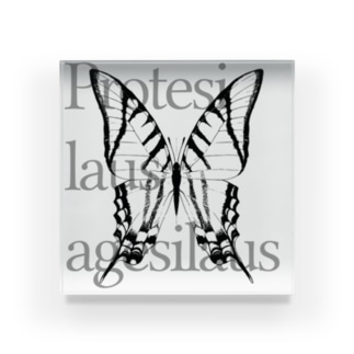 Protesilaus agesilaus Acrylic Block