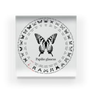 26 butterflies Acrylic Block