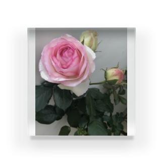 Glowの薔薇 Acrylic Block