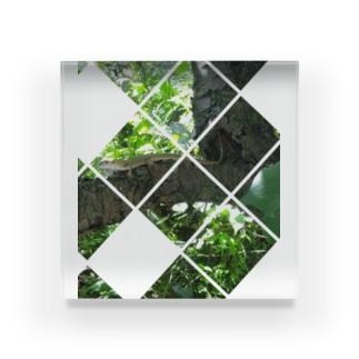 木陰のカナヘビさん Acrylic Block