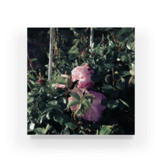 雨上がりの薔薇 Acrylic Block