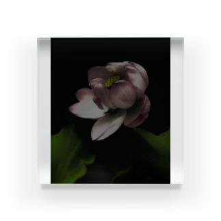 dark flower -hs- Acrylic Block