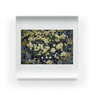 モッコウバラ Acrylic Block