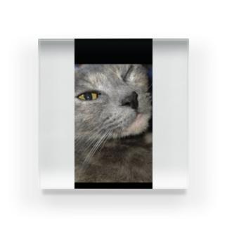 ウィンク猫 Acrylic Block
