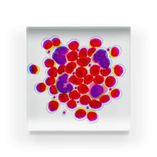 blood cells〜血球〜 Acrylic Block