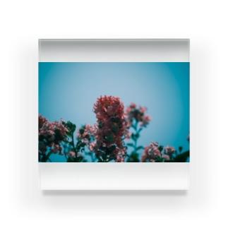 百日紅と空と Acrylic Block