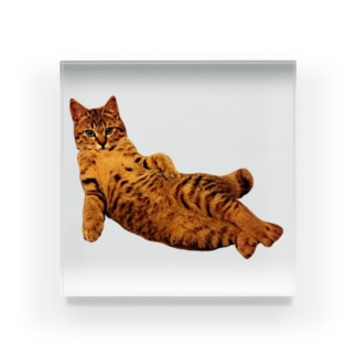 Elegant Cat ① Acrylic Block