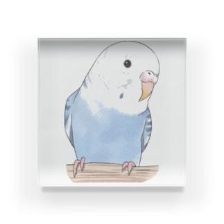 おしゃまな止まり木セキセイインコちゃん【まめるりはことり】 Acrylic Block