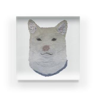 柴犬 (白) Acrylic Block