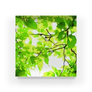 GREEN LEAVES Acrylic Block