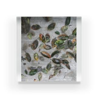 柿の葉 Acrylic Block