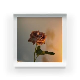 最後の薔薇 Acrylic Block