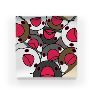 みっちりむっちり過密文鳥さん【まめるりはことり】 Acrylic Block