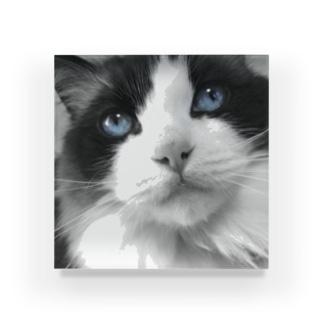 Mimi-blue eyes  Acrylic Block