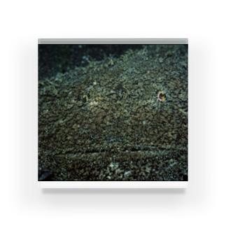 魚 アップ Acrylic Block