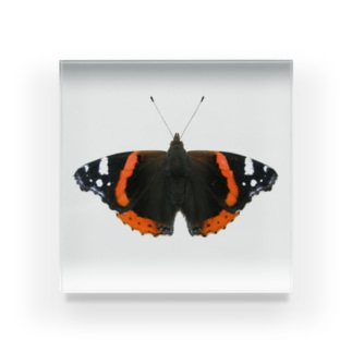 蝶々の標本 橙 Acrylic Block