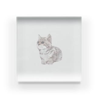 色鉛筆風の猫 Acrylic Block