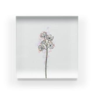 ひとさし【サンカヨウ】 Acrylic Block