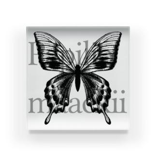 Papilio maackii Acrylic Block