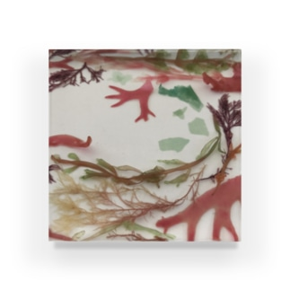 love seaweed Acrylic Block