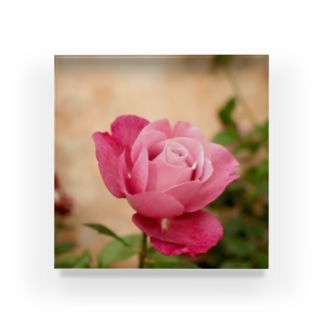 Rosy Rose Acrylic Block