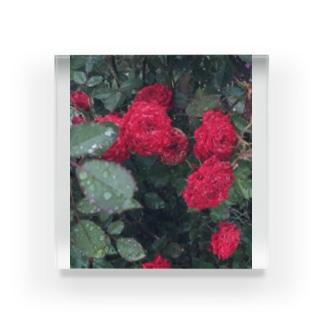 アの赤いお花 Acrylic Block