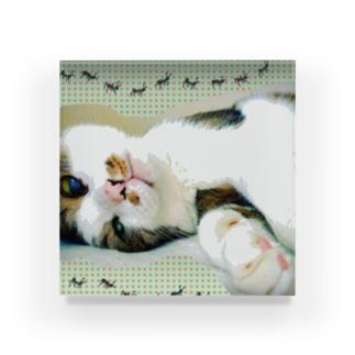 老猫にゃあ Acrylic Block