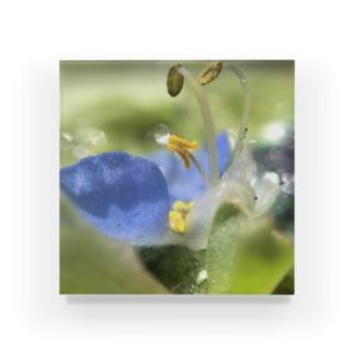 きらめきの花 Acrylic Block